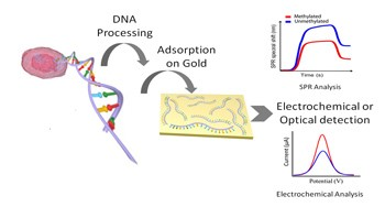 Image taken from Trau´s Group official page: https://aibn.uq.edu.au/files/12765/DNA-microdevices-Cancer-Detection.jpg