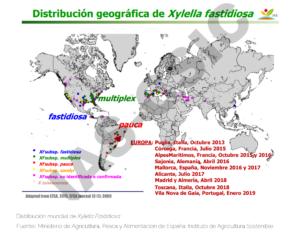 Mapa Mundial Xylella Fastidiosa
