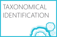 Taxonomical Identification