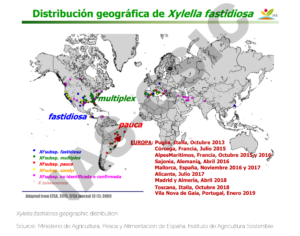 Xylella fastidiosa gepgraphic distribution